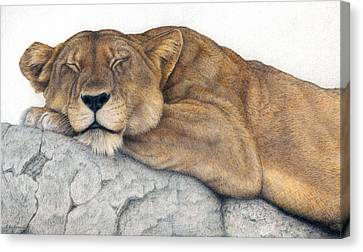 Power And Grace At Rest Canvas Print by Pat Erickson