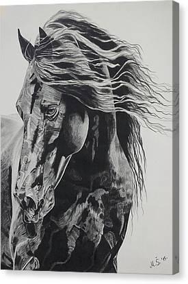 Power Of Horse Canvas Print by Melita Safran