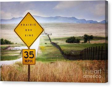 Prairie Dog Crossing Canvas Print by Tamyra Ayles