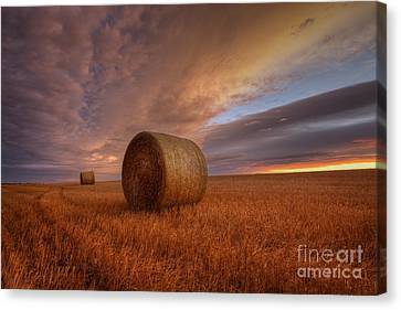 Prairie Harvest Canvas Print by Dan Jurak