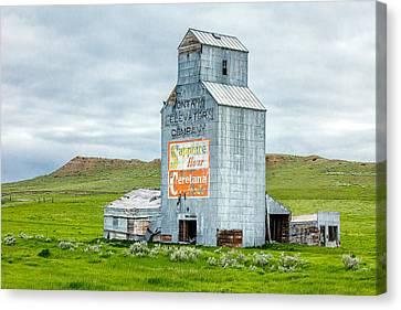 Prairie Sentinel Canvas Print by Todd Klassy