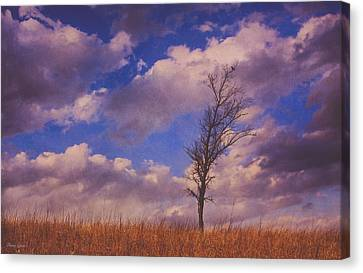 Prairie Tree Survivor Canvas Print by Anna Louise
