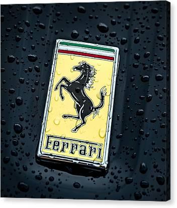 Prancing Stallion Canvas Print by Douglas Pittman
