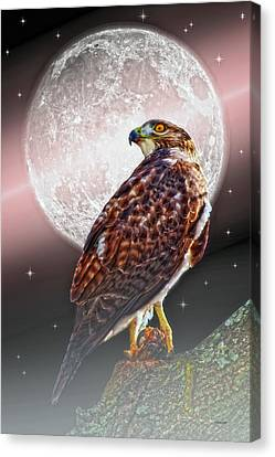 Predator Canvas Print by Tom York Images