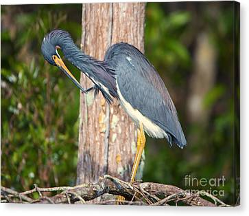 Preening Canvas Print by Mike Dawson