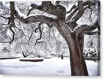 Prescott Park Winter Garden Canvas Print by Eric Gendron