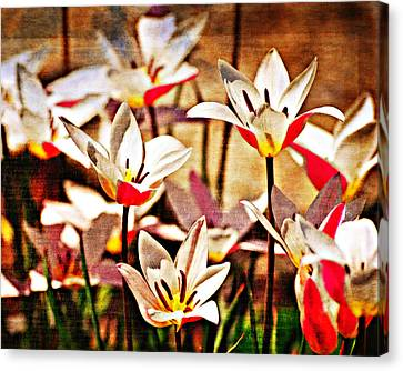 Pretty Flowers Canvas Print by Marty Koch