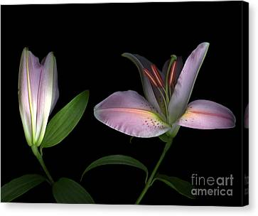 Pretty In Pink Canvas Print by Christian Slanec