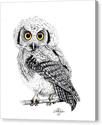 Pretty Little Owl Canvas Print by Isabel Salvador