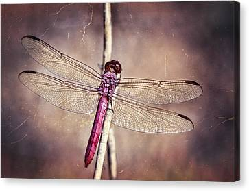 Pretty Pink Dragonfly  Canvas Print by Saija  Lehtonen