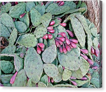 Prickly Pear Cactus Fruits Canvas Print by Mother Nature