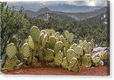 Cactus Country Canvas Print by Racheal Christian