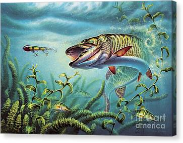 Provoked Musky Canvas Print by Jon Q Wright
