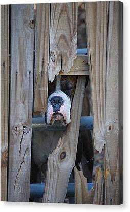 Psst Help Me Outta Here Canvas Print by DigiArt Diaries by Vicky B Fuller
