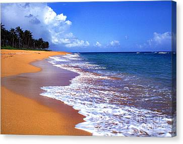 Puerto Rico Shoreline Along Pinones Canvas Print by Thomas R Fletcher