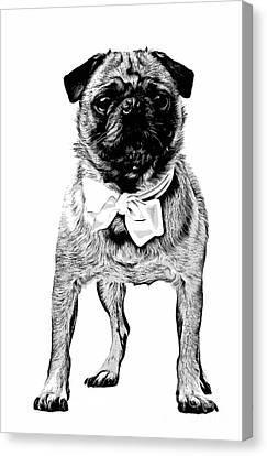 Pug Canvas Print by Edward Fielding