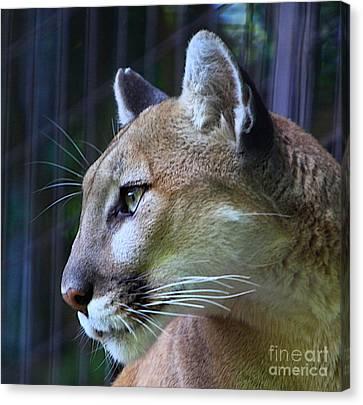 Puma Canvas Print by Robert Pearson