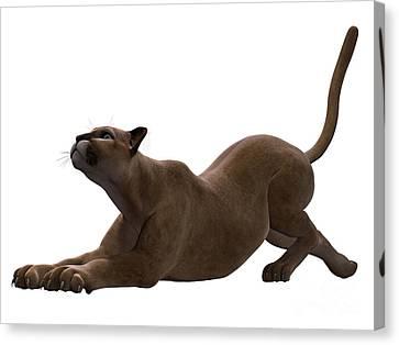 Puma Stretching Canvas Print by Corey Ford