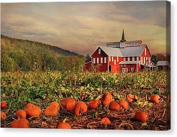 Pumpkin Farm Canvas Print by Lori Deiter