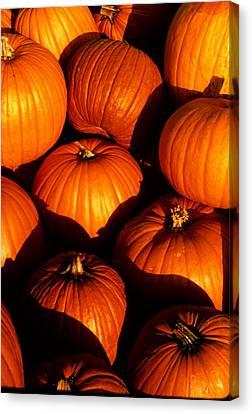 Pumpkin Patch Canvas Print by Cyril Furlan