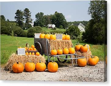 Pumpkin Sale Canvas Print by Jane Rix