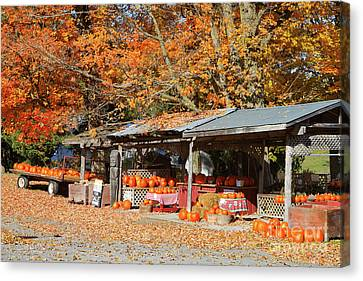 Pumpkins For Sale Canvas Print by Louise Heusinkveld