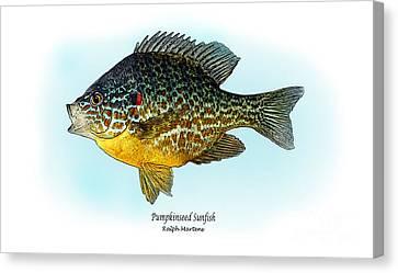 Pumpkinseed Sunfish Canvas Print by Ralph Martens