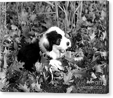 Puppy In The Leaves Canvas Print by Kathleen Struckle