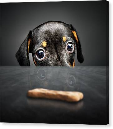 Puppy Longing For A Treat Canvas Print by Johan Swanepoel