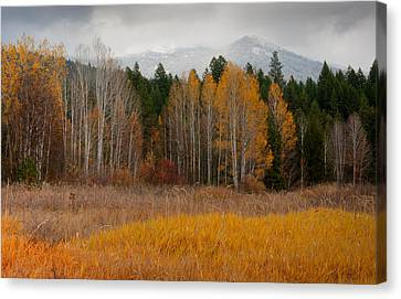 Purcell Gold Canvas Print by Idaho Scenic Images Linda Lantzy