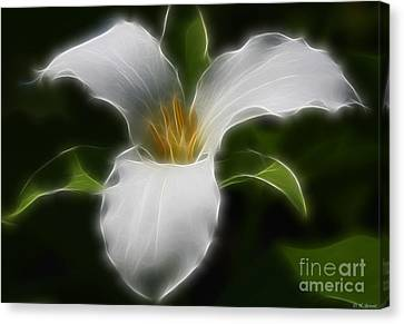 Pure White Trillium Canvas Print by Deborah Benoit