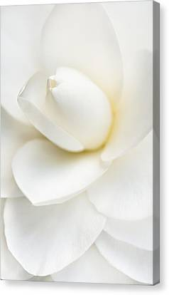 Purity Canvas Print by Mary Jo Allen