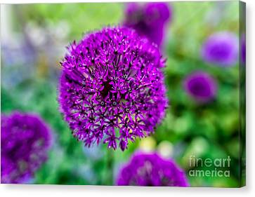 Purple Canvas Print by Adrian Evans