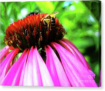 Purple Cone Flower Canvas Print by Maria Massimiano
