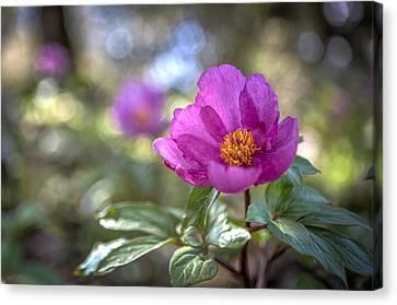 Purple Forest Wild Flower  Canvas Print by Dirk Ercken