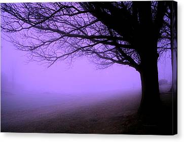 Purple Haze December Fog By The Sleepy Pin Oak Pa Canvas Print by Thomas Woolworth