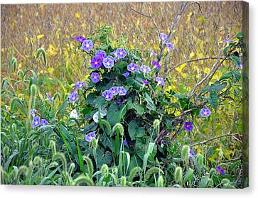 Purple In The Morning Canvas Print by Brittany H
