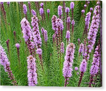 Purple Missles Canvas Print by Deborah  Crew-Johnson