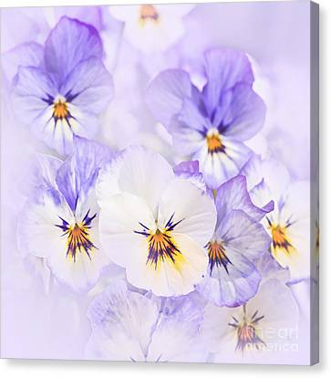 Purple Pansies Canvas Print by Elena Elisseeva