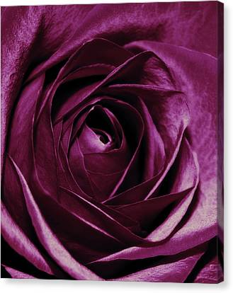 Purple Passion Canvas Print by Cathie Tyler