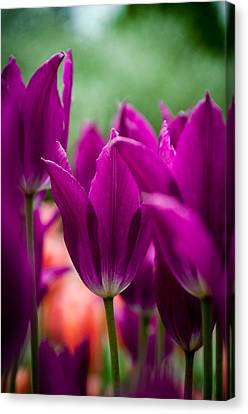 Purple Persuasion Canvas Print by KG Photography