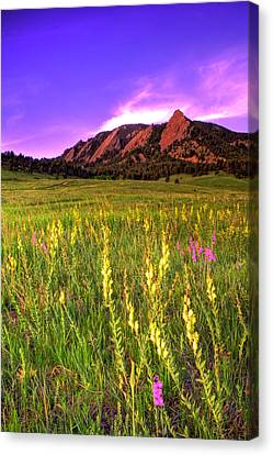 Purple Skies And Wildflowers Canvas Print by Scott Mahon