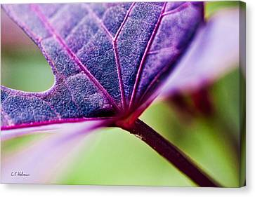 Purple Veins Canvas Print by Christopher Holmes