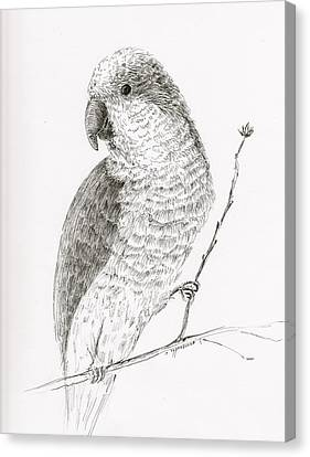 Quaker Parrot In The Tree Canvas Print by Crazy Cat Lady