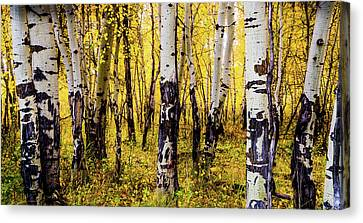 Quakies In Autumn Canvas Print by TL Mair
