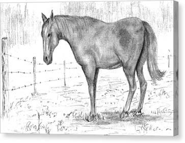 Quarter Horse Canvas Print by Barney Hedrick
