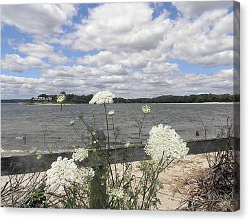 Queen Annes Lace Canvas Print by Kate Gallagher