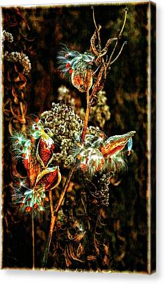 Queen Of The Ditches II Canvas Print by Steve Harrington
