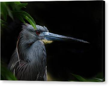 Quietly Alert Canvas Print by Skip Willits