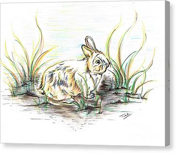 Rabbit So Unique  Canvas Print by Teresa White